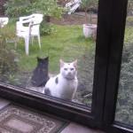 Feivel und Jerry wollen rein
