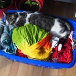 Dino im Wäschekorb