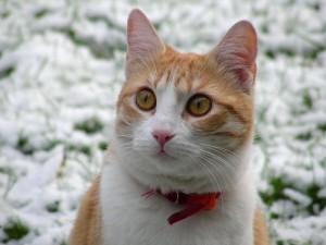 Katze Moni im Schnee
