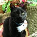 Jerry mit seiner neuen CatCam
